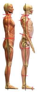 Head posture dominos effect