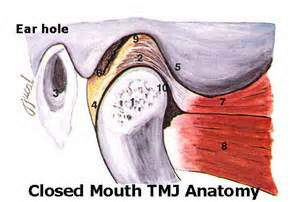 closed mouth tmj anatomy