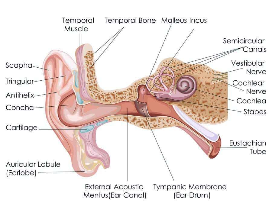 ear pain due to tmj diagram
